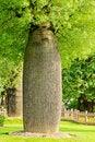 Free Bottle Tree Royalty Free Stock Photography - 20283337