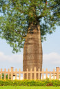 Free Bottle Tree Royalty Free Stock Photos - 20283378