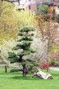 Free Japan Garden Stock Image - 20287541