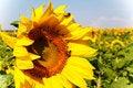 Free Pollination Stock Photo - 20288120