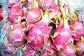 Free Pitaya Royalty Free Stock Image - 20289186