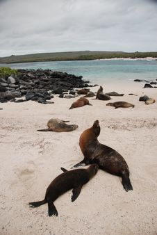 Free Galapagos Sea Lions Stock Photos - 20280343