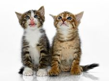 Free Kittens Stock Photos - 20281403