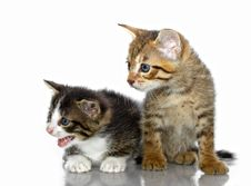 Free Kittens Stock Images - 20281444