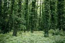 Free Trees Covered With Leaves Stock Photography - 20281532