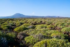 Free Green View Of Lanzarote Royalty Free Stock Images - 20281589