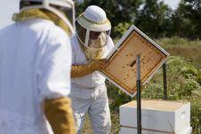 Man And His Bees Royalty Free Stock Photo