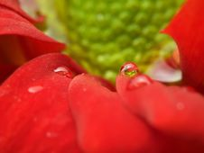 Free Water Drops Od Flower Royalty Free Stock Photography - 20283087