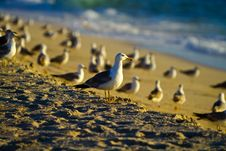 Free Seagulls By The Sunsets Stock Image - 20283251