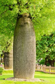Free Bottle Tree Royalty Free Stock Photography - 20283337