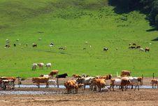 Free Landscape  Of   Grassland Stock Images - 20283454