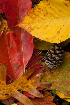 Free Autumn Colors Stock Image - 20284841