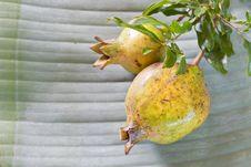 Free Pomegranate Stock Photos - 20286473