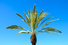 Free Palm Against The Sky. Stock Image - 20288051