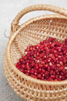 Free Wild Strawberries Royalty Free Stock Images - 20289349