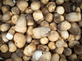 Free Mushrooms In The Market Royalty Free Stock Photos - 20290258
