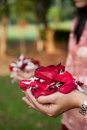 Free Petals Of Flowers In Hands Stock Images - 20291624