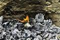 Free Burning Pine Cones Royalty Free Stock Photo - 20293695