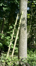Free The Wooden Ladder Stock Photo - 20295150