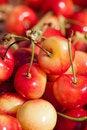 Free White Cherries Royalty Free Stock Photos - 20295868