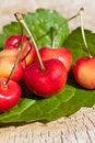 Free Cherries Royalty Free Stock Photo - 20295875