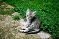 Free Baby Kitten Staring Stock Photos - 20299083