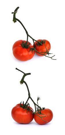 Free Fresh Tomatoes 0015 Royalty Free Stock Image - 20290156