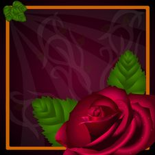 Free E-card: Red Rose Royalty Free Stock Photography - 20290467