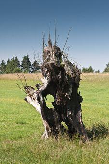 Free Old Burnt Tree On Grassland Royalty Free Stock Photo - 20291345