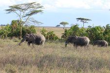 Free Elephant Family Stock Photos - 20291683