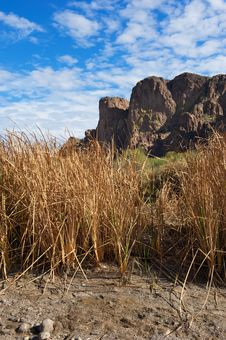 Free Tall Grass In Front Of Desert Mountain Stock Photo - 20291910