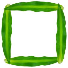 Free Green Leaves Frame Royalty Free Stock Photos - 20291928