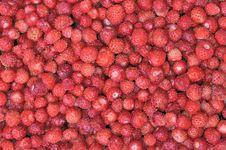Free Strawberry Royalty Free Stock Photos - 20293688