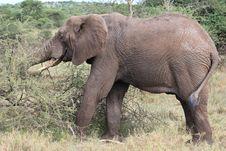 Free Elephant Stock Photo - 20293980
