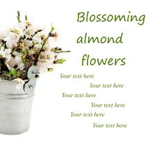 Free Blossoming Almond Flowers Bouquet Royalty Free Stock Photos - 20294408