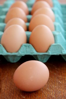 Free Eggs Stock Images - 20294664