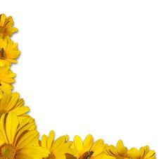 Free Corner Yellow Chamomile Royalty Free Stock Photo - 20295005