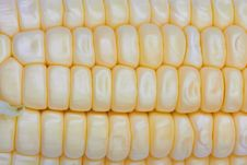 Free Fresh Corn Royalty Free Stock Photo - 20295755