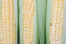Free Fresh Corn Stock Photography - 20295792