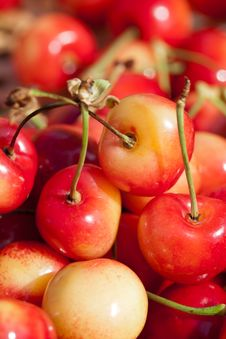 Free White Cherries Royalty Free Stock Photos - 20295868