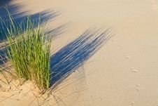 Free Sand Dune With Helmet Grass Stock Image - 20296961