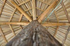 Free Umbrella Palm Stock Photo - 20297760