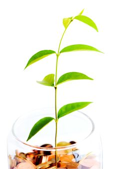 Free Money Tree (saving) Growing Royalty Free Stock Image - 20298236