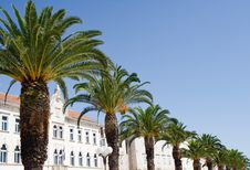 Free Palm Promenade In Split Stock Images - 20298254