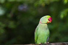 Free Green Parrot Bird Stock Photos - 20298333
