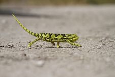 Free Chameleon Character Royalty Free Stock Image - 20299376