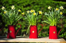 Free 3 Pots Of Flowers Royalty Free Stock Photos - 20299498