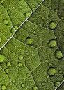 Free Leaf Background Royalty Free Stock Photo - 2033515