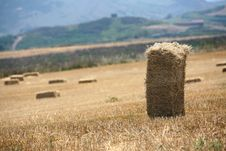 Free Field Of Straw Stock Images - 2030144