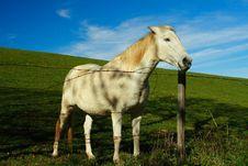 Free White Horse Stock Photo - 2032680